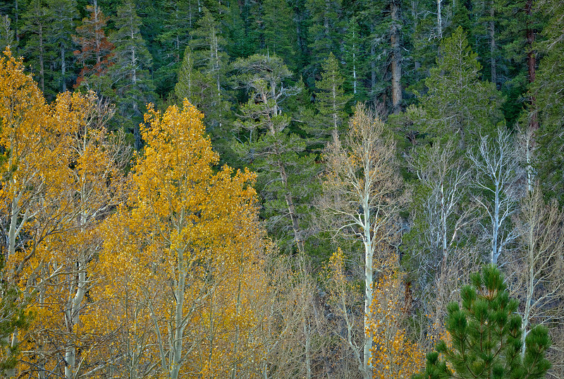 Autumn Palette I, Near Sonora Pass, CA