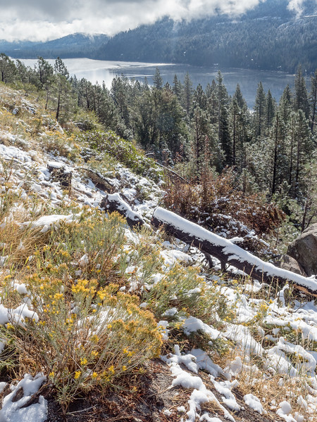 Buttercup Flowers, September Snow, and Donner Lake