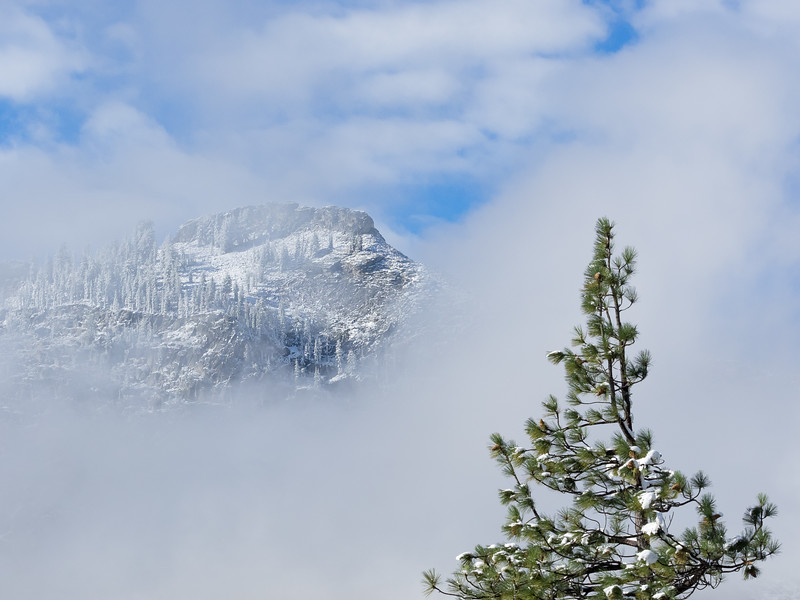 Pine Tree, Fog, Fresh September Snow, and Clouds