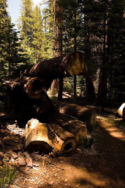 Fuel reduction work in Yosemite