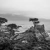 Cypress Point, Carmel
