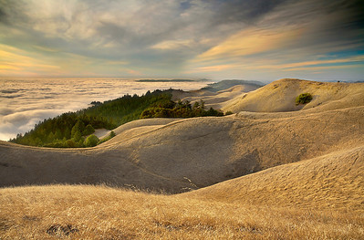 The top of Mt Tamalpais during the May-October dry season is a great place to watch the fog flow and the sun set. Hiking can become hazardous, as the dry grass is very slippery. But the views are well worth the risk! This is why California is called 'The Golden State.' Not because of the Golden Gate, or the discovery of Gold in 1949.  I chose an extra short exposure to show detail in the grasses, as there was not enough wind to show lots of motion.  I chose this exact location to show where the redwoods meet the grassy curve on the left and show a peek of distant hills on the right horizon.