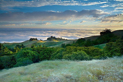 A strong breeze and long exposure time softened the flowing grasses and trees on Mt. Tamalpais. It also pushed the fog rapidly through the Golden Gate and into the bay this evening.  I used a 1-second exposure to show lots of more motion.  Here, I also had to shelter the camera and tripod with my body in order to avoid camera shake.