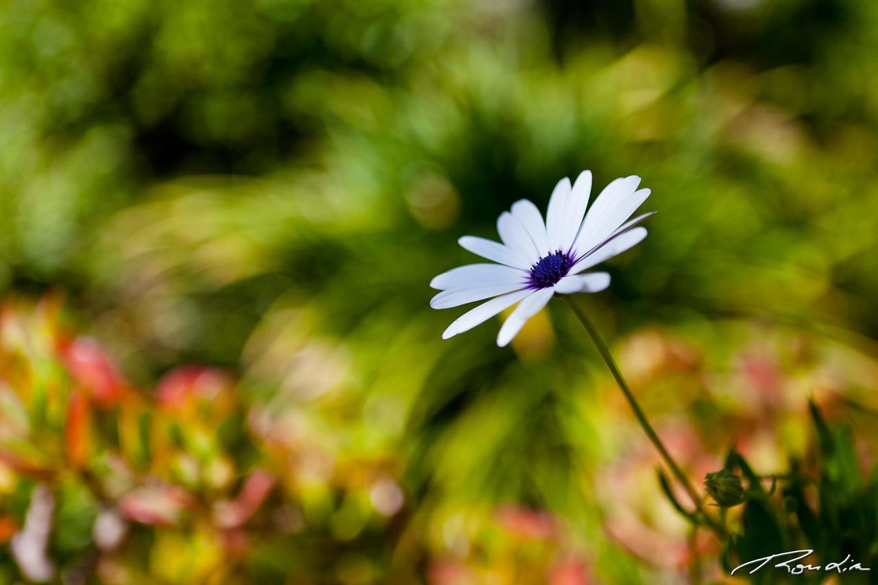 amongst the blur
