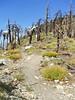 Mt. Islip Trail.