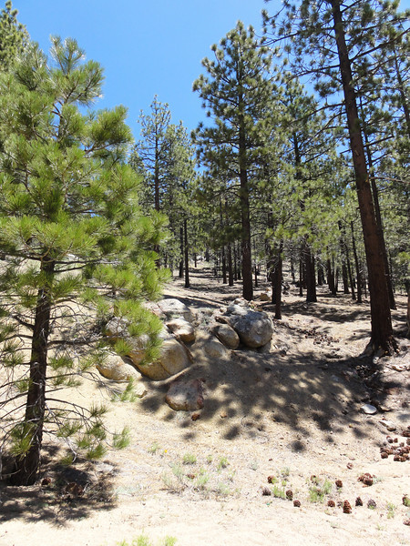 """The Sorrell Peak """"Trailhead"""" sure looks different this time."""