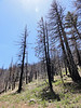 Heading up to Piute Lookout.<br /> <br /> Lots of burned trees today.