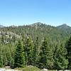 Peak 9021 and Jackass Peak thru the trees.