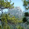 Jackass Peak thru the trees.