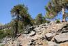 Rocky terrain up higher.