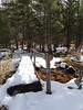 Tracks on the bridge across the stream thru the camp.