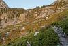 Cascade along the way to Shepherd Pass.