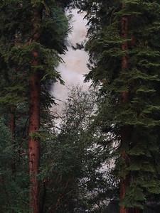 Whitney Portal Waterfall thru the trees.  Awfully brown.