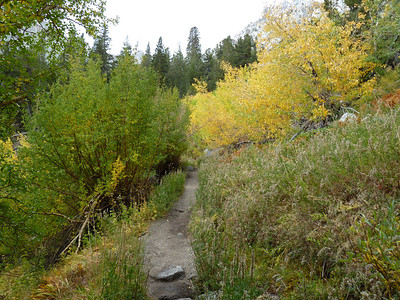 Fall colors on the Main Trail.