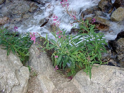 Flowers along the creek.