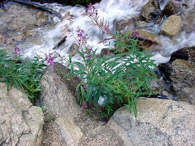 Flowers along creek.