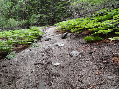 A new groove in the Mountaineer's Route trail.