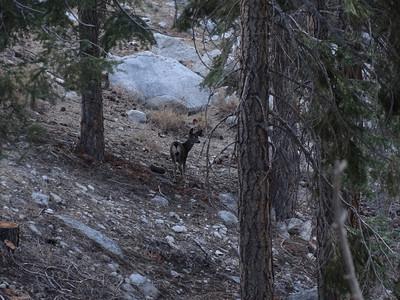 A fawn ran across my path.