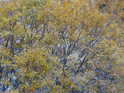 Some remaining Fall colors.
