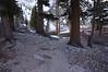 Walking thru the trees along Bighorn Park.