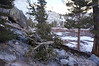 A new downed tree at the entry to Bighorn Park.