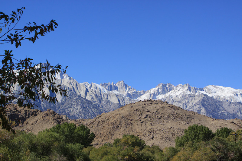The view over the Alabama Hills to the Sierra crest.<br /> <br /> (Nice use of leaves to block the supposedly higher Lone Pine Peak.)