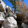 "Doug Sr. climbing up to ""The Pine."""