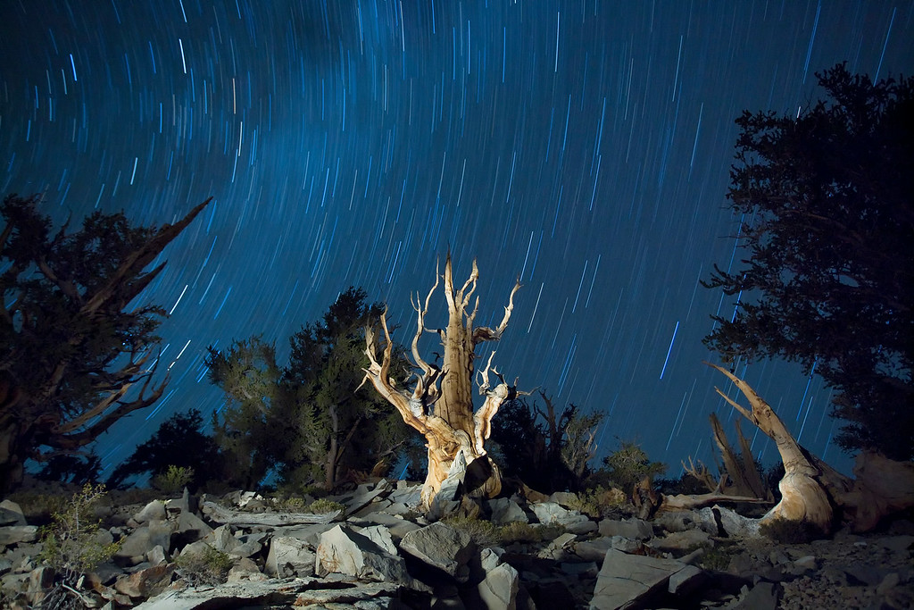 Birstlecone Pines Night