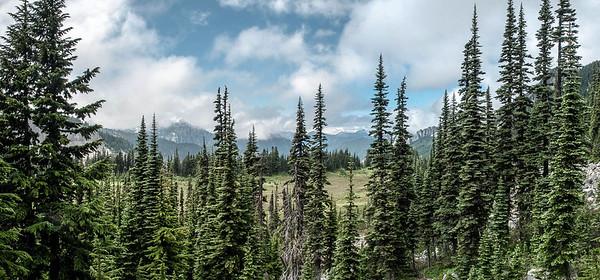 Abies lasiocarpus (subalpine fir) - hike up to Mystic Lake Camp Mt. Rainier backpack
