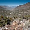 Echinocereus (triglochidiatus) mohavensis (Mohave kingcup cactus) - Death Valley Wildrose Peak Trail