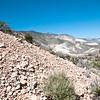 Eriogonum vineum subsp. ovalifolium (Cushenbury buckwheat) - BLM RTE Carbonate species Cushenbury Canyon