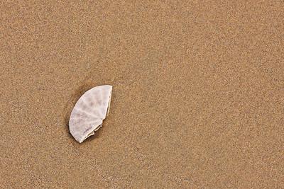 Beach Broken Shell