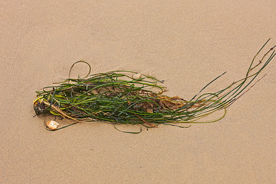 08081ds3_9763_BeachDetails_c