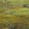 Wildflowers at Big Sur