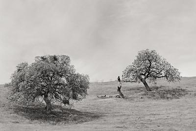 Hwy25 Oak