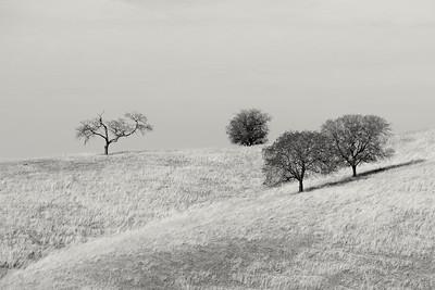 Golden Hills and Oak