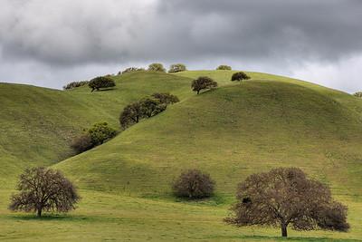Oak Hill #1