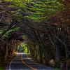 20150607_Fort Bragg-Mendocino_0845