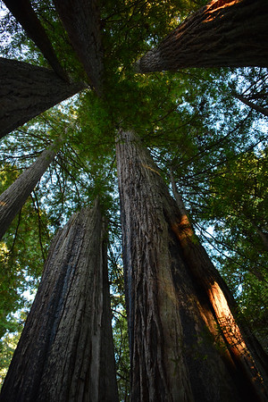 California: Redwood National Park 2016