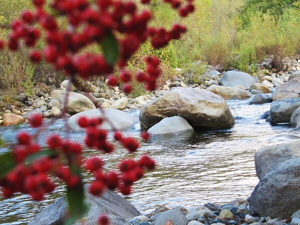 California Rivers