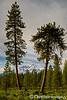 Shasta Pines 2