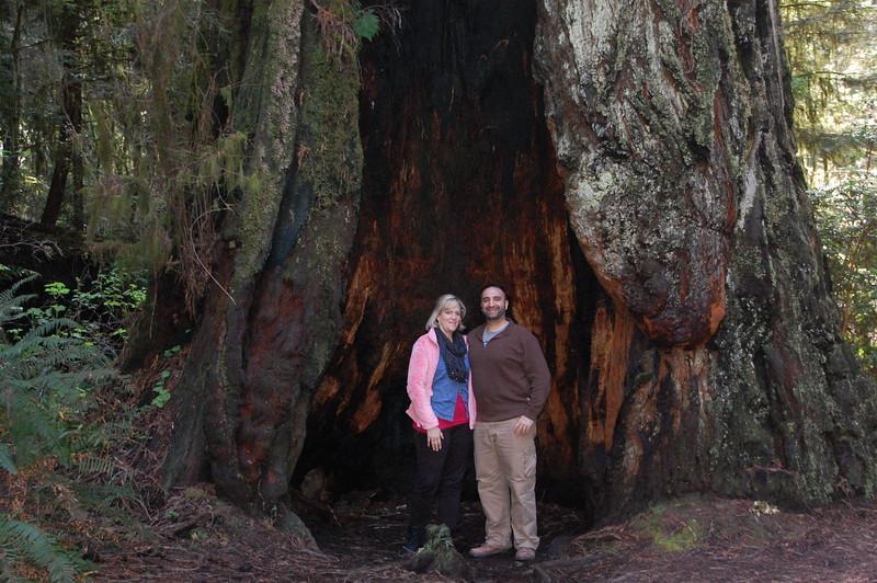 Das ist a big tree!