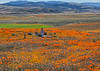 20190413_Antelope Valley Poppy Reserve_6971