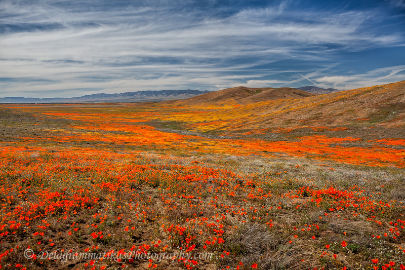 20190413_Antelope Valley Poppy Reserve_6941