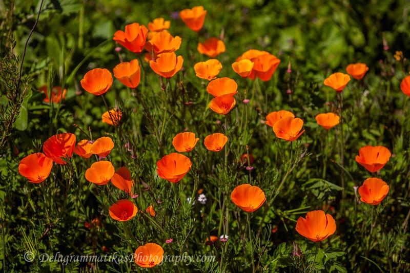 20170312_SoCal Spring Flowers_0696