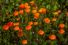 20170312_SoCal Spring Flowers_0696