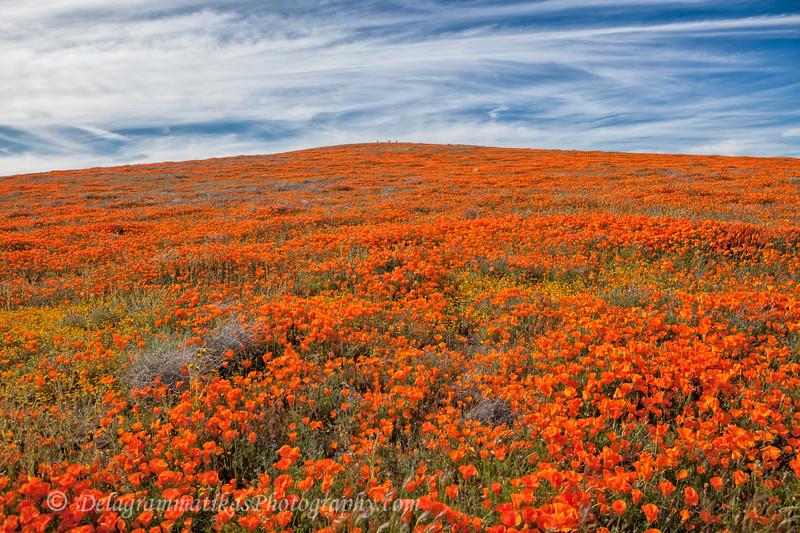 20190413_Antelope Valley Poppy Reserve_6994