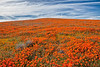 20190413_Antelope Valley Poppy Reserve_6994