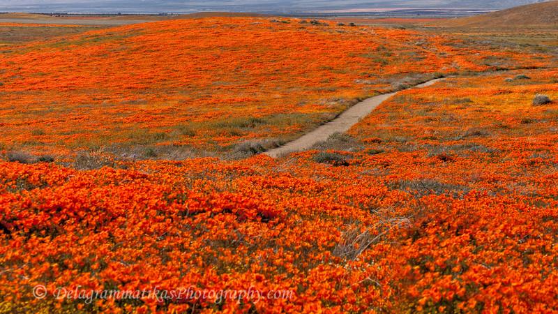 20190413_Antelope Valley Poppy Reserve_6981