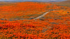 20190413_Antelope Valley Poppy Reserve_6981